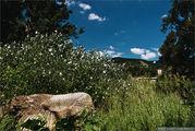 Местный  пейзаж / Словакия