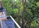 Завтрак на балконе / Панама