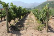 Вид на виноградники / Чили