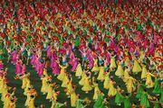 Действие на стадионе / Корея - КНДР