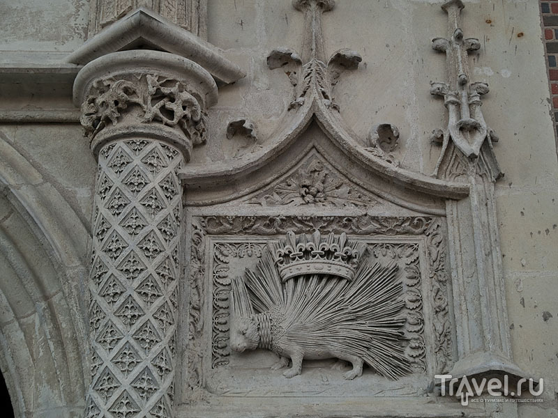 Дикобраз с короной / Фото из Франции