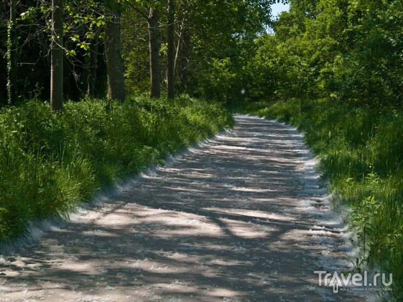 Велосипедная дорожка в лесу рядом с Канде-сюр-Бьеврон / Фото из Франции