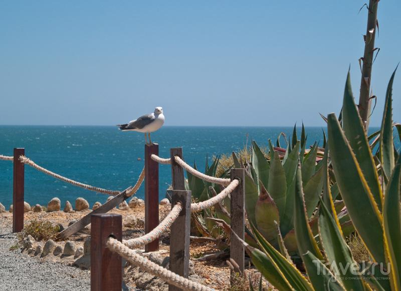 Морской берег в Алгарве / Фото из Португалии