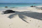 Песок на пляже / Сейшелы