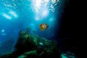 Житель океана / Португалия