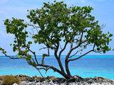 Дерево на пляже / Мальдивы