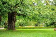 Английский парк / Чехия