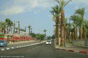 Придорожные пальмы / Израиль