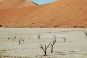 Мертвые деревья / Намибия