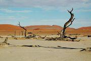 На фоне дюн / Намибия