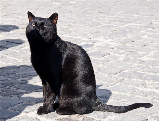 Официальный кот Ватикана / Ватикан