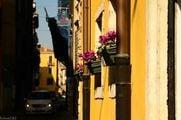 Цвет - лиловый / Италия