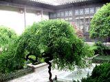 Мини-деревца / Китай