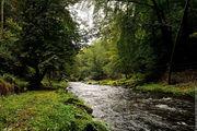 Лес и река / Чехия