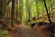 Вход в лес / Чехия