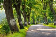 Красивая дорога / Чехия