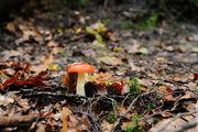Одинокий гриб / Чехия
