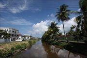 Канал и пальмы / Гайана