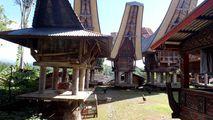 Куры во дворе / Индонезия