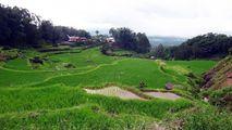Работа на полях / Индонезия