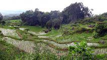Рельеф полей / Индонезия