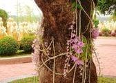 Орхидеи / Тайвань