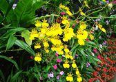 Коллекция растений / Тайвань