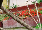 Ящерица на дереве / Тайвань
