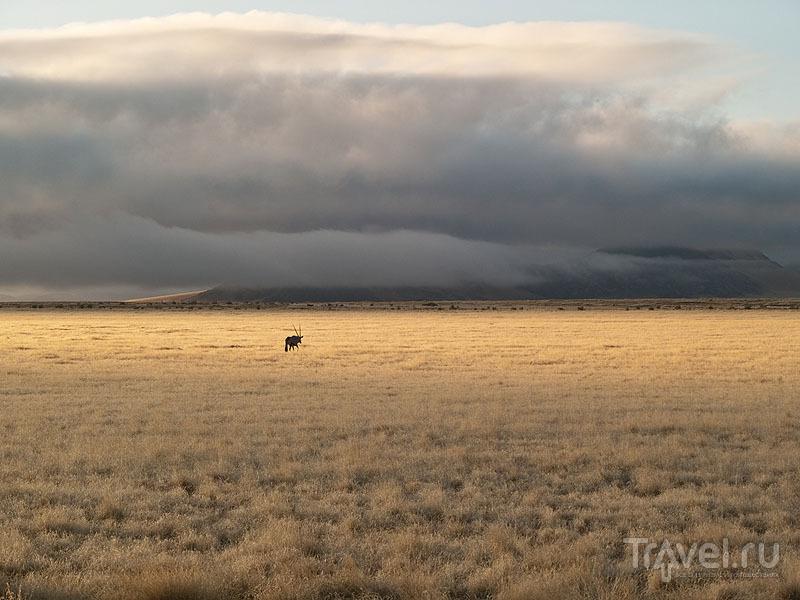 Пустыня Намиб / Фото из Намибии