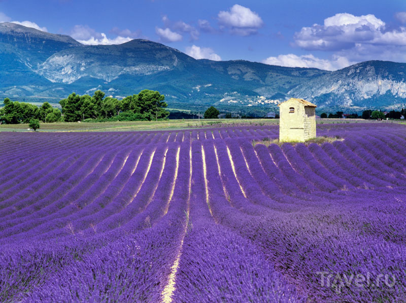 http://img.travel.ru/images2/2012/05/object200906/lavender-03.jpg