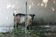 Житель деревни Ostros / Черногория