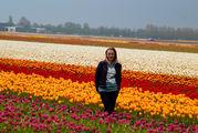 На фоне тюльпанов / Нидерланды