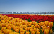 Первое поле / Нидерланды