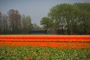 Чьи-то домики / Нидерланды