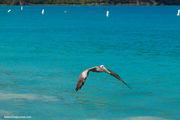 Необыкновенно красивые птицы / Виргинские острова (США)