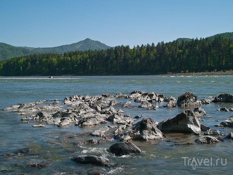 Каменистый берег Катуни / Фото из России
