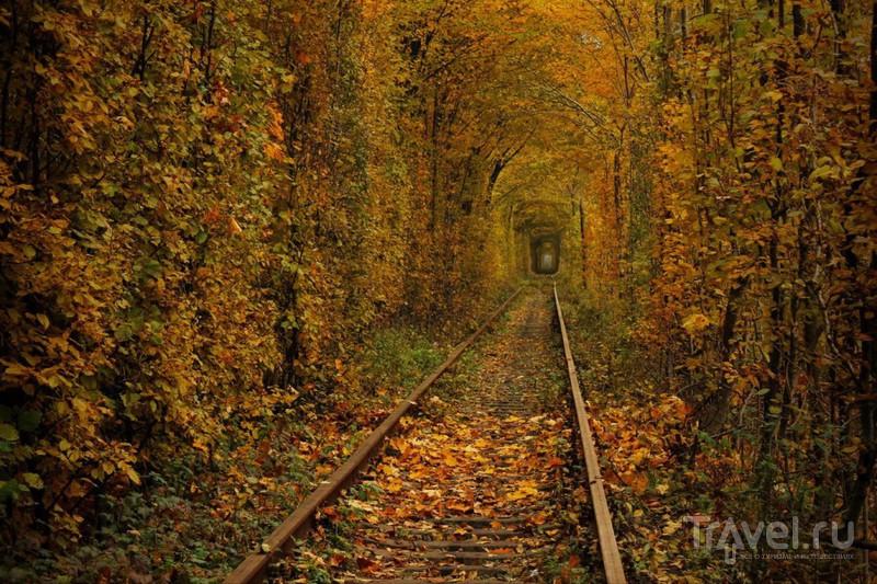 """Осень в """"Тоннеле любви"""" / Украина"""