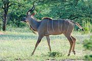 Антилопы / Намибия