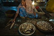 На рыбном рынке / Бангладеш