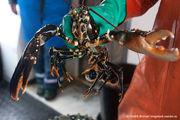 Незабываемое морское сафари из центра Гётеборга на лобстеров, крабов и морских раков.