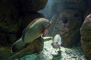 Рыбы на виду / Греция