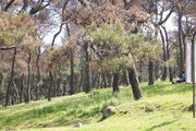 Покрыты лесами / Турция