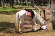 Кормление лошади / Турция