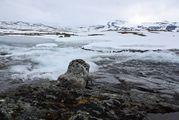 Снег и камни / Норвегия