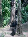 Разные приматы / США