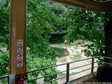Вагончик над зоопарком / США