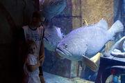 Общение с рыбами / ОАЭ