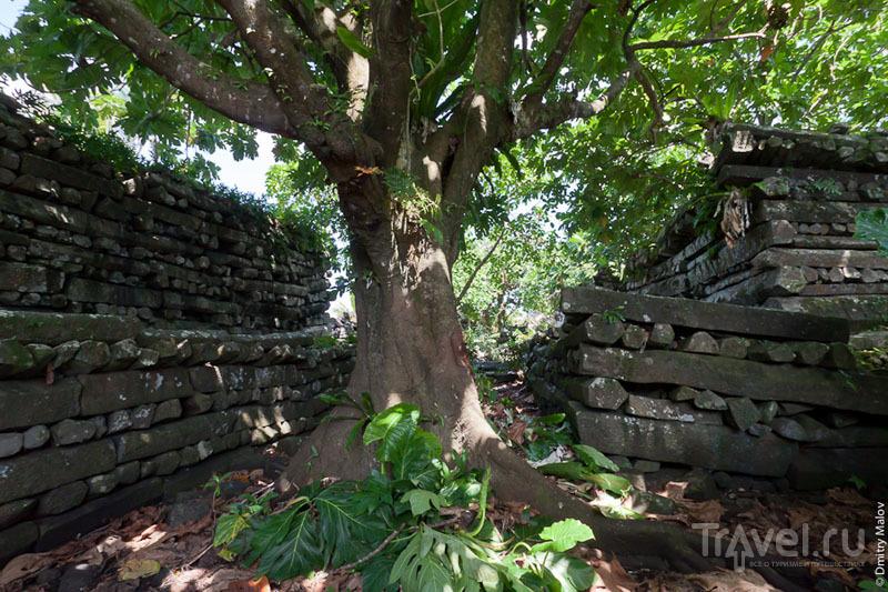 В каменном городе, Микронезия / Фото из Микронезии