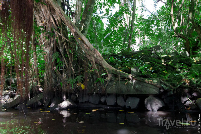 Стены, заросшие деревьями, Микронезия / Фото из Микронезии