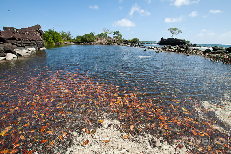 Каменный город Нан-Мадол, Микронезия / Фото из Микронезии